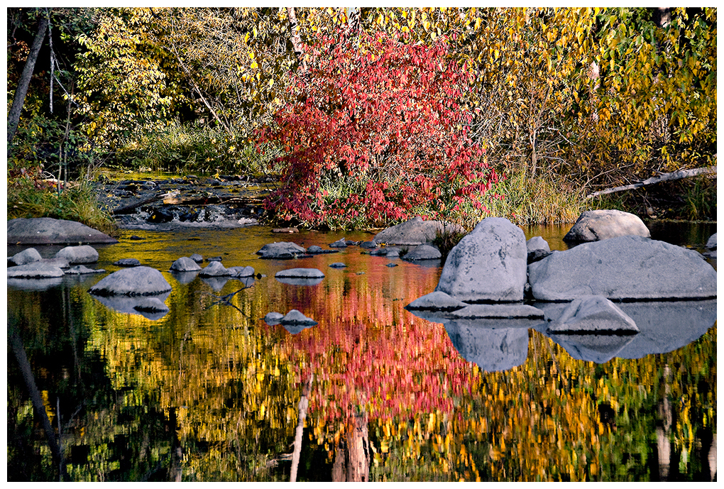 Fall foliage by the Yuba River