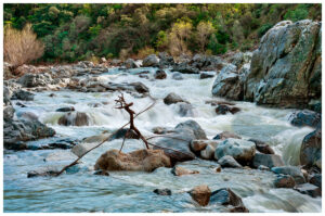 Twigs in the Yuba River form a sculpture