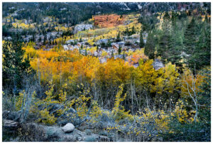 Fall colors in the eastern Sierra, near Bishop CA