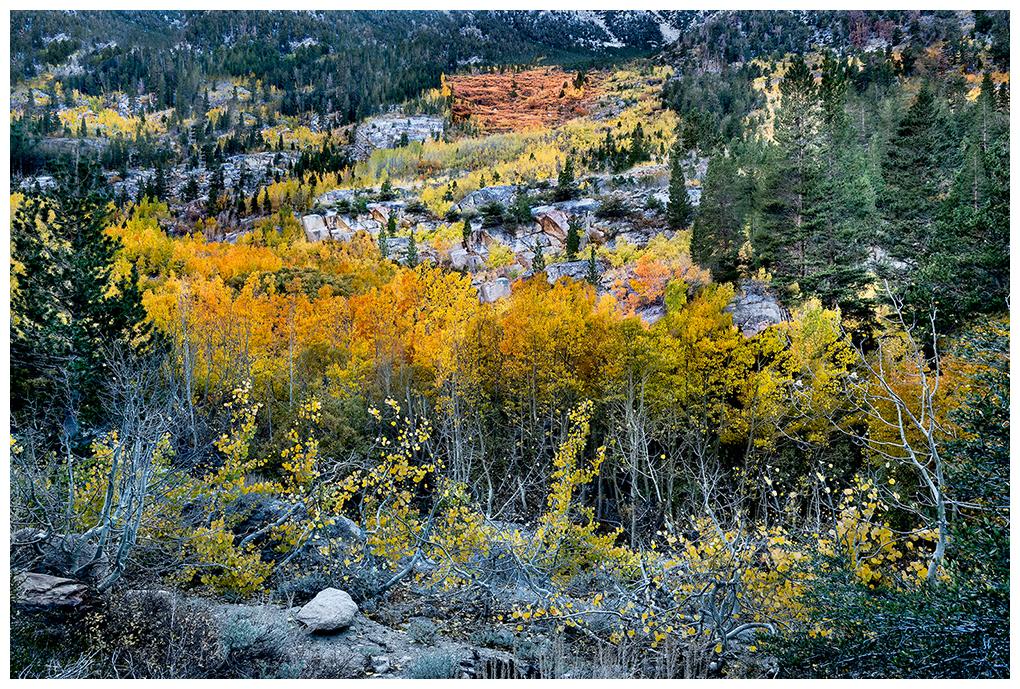 Fall colors in the eastern Sierra, near Bishop CA