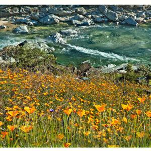 Yuba Spring