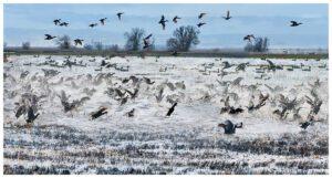 Collusa Bird Sanctuary